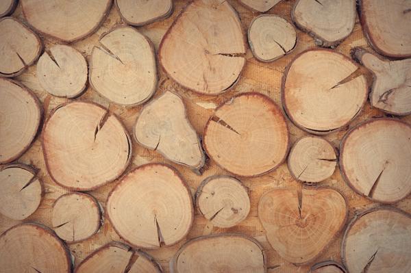 incisioni su legno roma